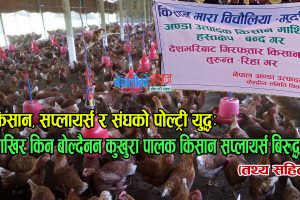 किसान, सप्लायर्स र संघको पोल्ट्री युद्धः आखिर किन बोल्दैनन कुखुरा पालक किसान सप्लायर्स बिरुद्ध ?