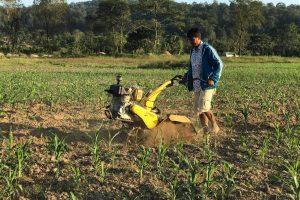 माडीमा लकडाउनका कारण फलफूलखेती हुन नसकेपछि मकै खेती गरियो
