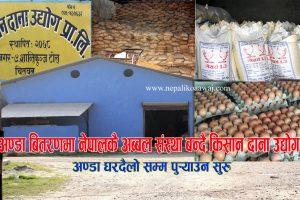 अण्डा बितरणमा नेपालकै अब्बल संस्था बन्दै किसान दाना, अण्डा घरदैलो सम्म पुर्याउन सुरु